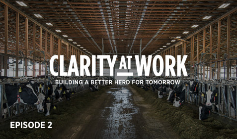 Clarity at work: Building a better herd for tomorrow. Episode 2.