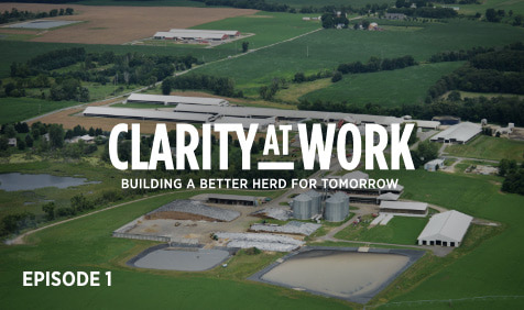 Clarity at work: Building a better herd for tomorrow. Episode 1.