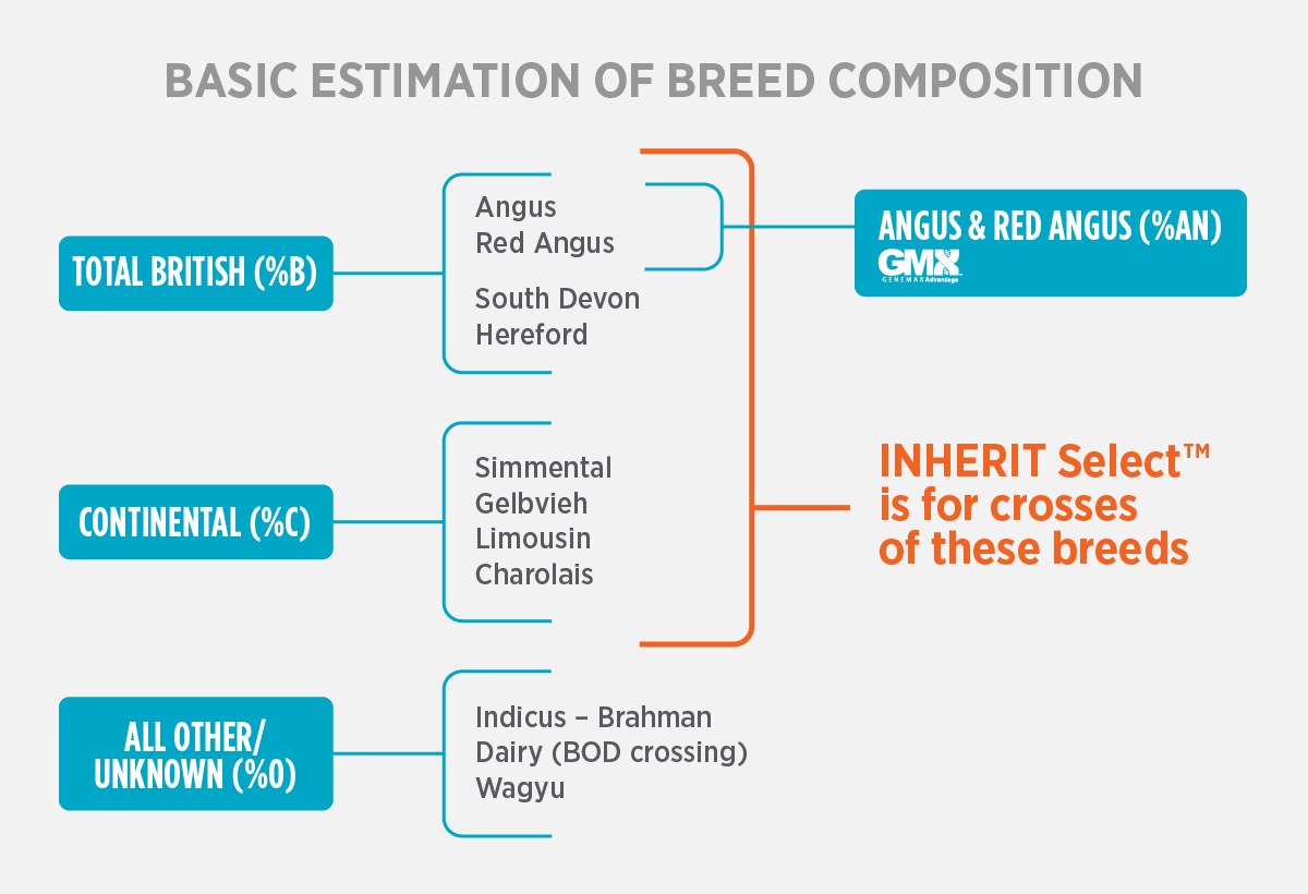 Breed Composition